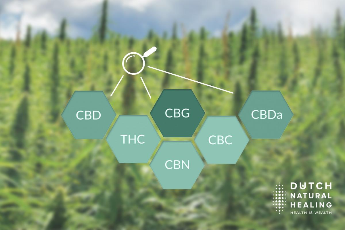 Cannabinoide erklärt: Was ist der Unterschied zwischen CBD, CBG und THC?