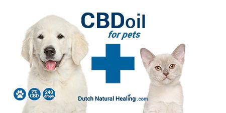 CBD Olie voor Huisdieren
