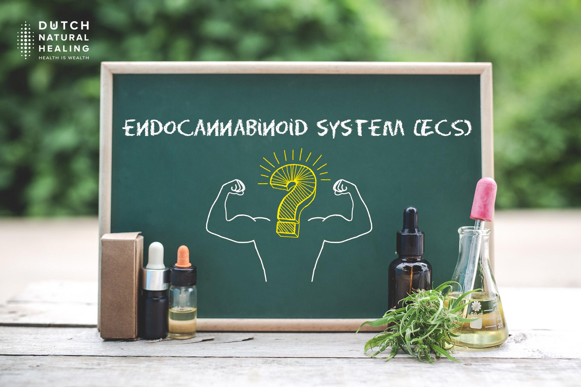 How does CBD work: the endocannabinoid system (ECS) explained